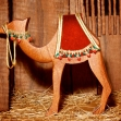 Baby Camel Left